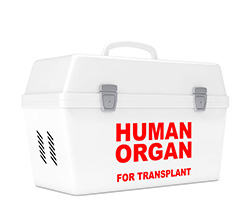 Human Organ